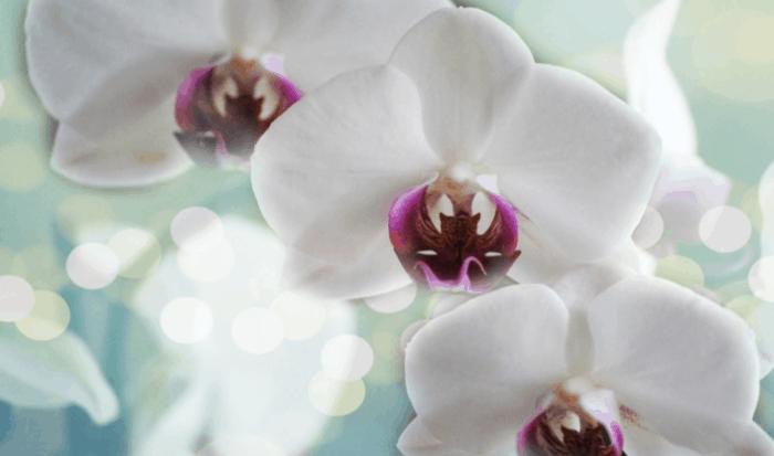 Orchids Slider